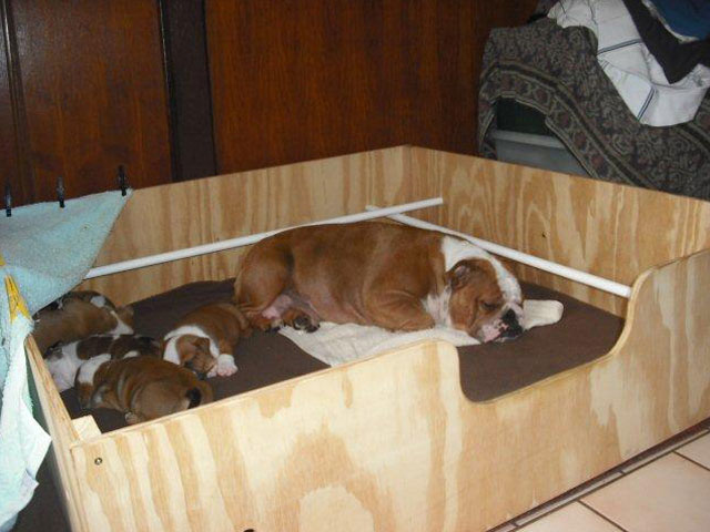 how to make a whelping box for dogs